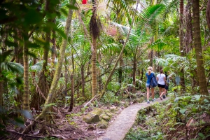 People hiking at El Yunque National Forest in Puerto Rico